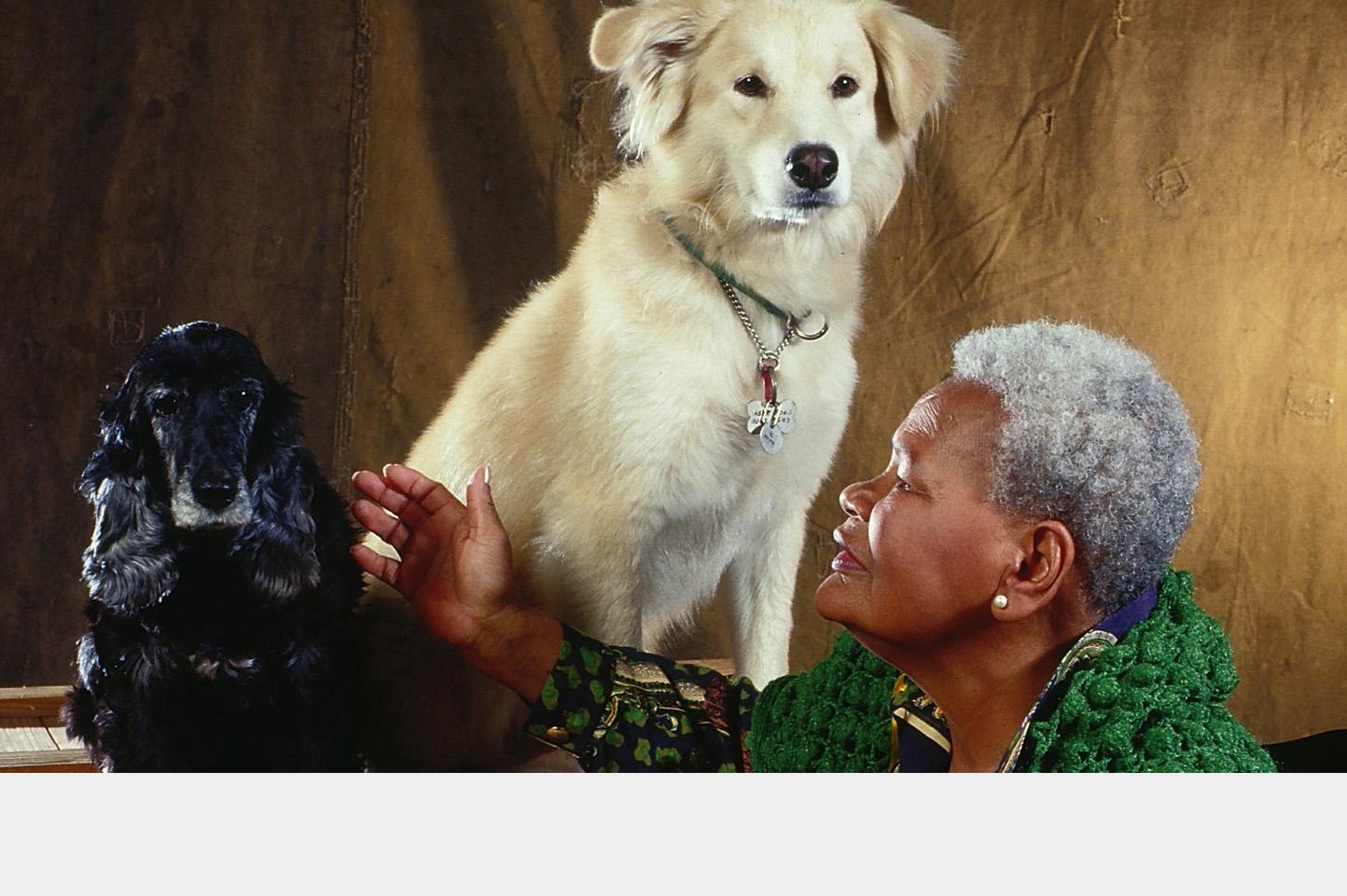 Projeto Cão do Idoso